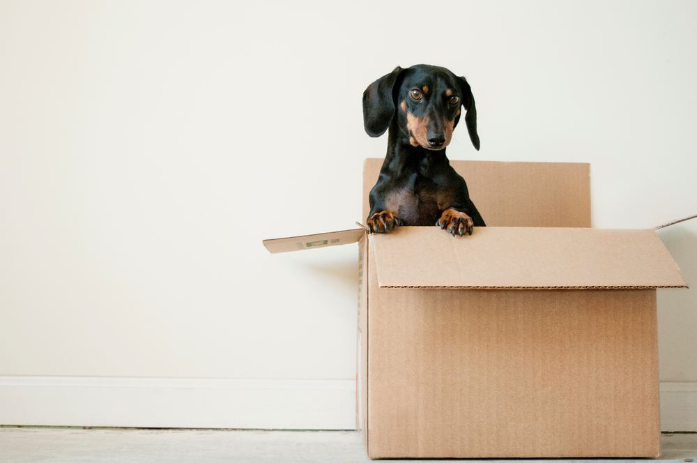 Hjelp til å flytte?